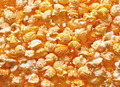 Salted popcorn grains against white background - PhotoDune Item for Sale