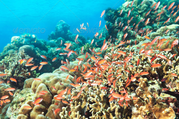 Coral reef - Stock Photo - Images