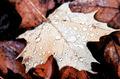 Canada - PhotoDune Item for Sale