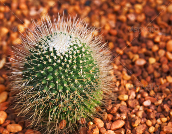 Close-up of a prickly cactus - Stock Photo - Images