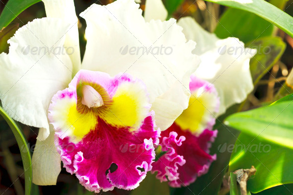 Beautiful orchid - Stock Photo - Images