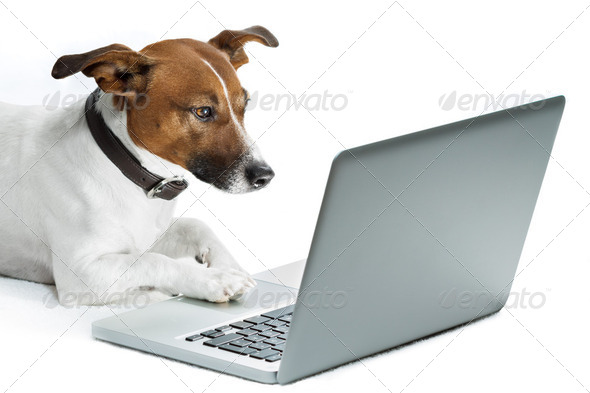 PhotoDune dog computer 2068802