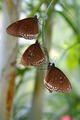 Tropical butterflies - PhotoDune Item for Sale
