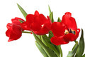 Spring flower - bouquet of red tulips. - PhotoDune Item for Sale