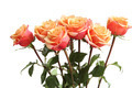 Bouquet of orange roses - PhotoDune Item for Sale