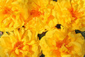 Exotic flowers - Cochlospermum regium - PhotoDune Item for Sale