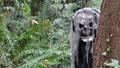 Horror forest monster 01 - PhotoDune Item for Sale