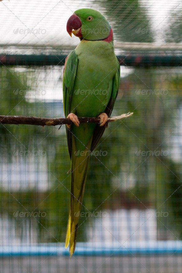 Green macaw red beak - Stock Photo - Images