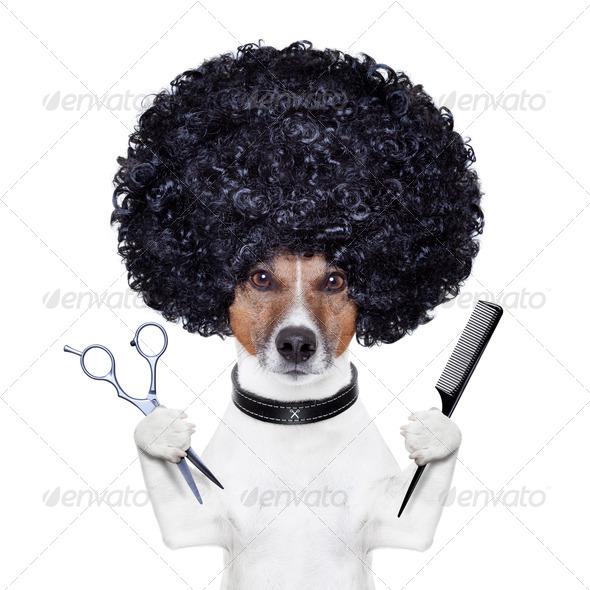 PhotoDune hairdresser scissors comb dog 3265716