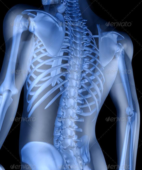 PhotoDune Skeleton of the man 2077168