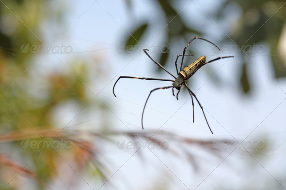 Spider in its web - Stock Photo - Images
