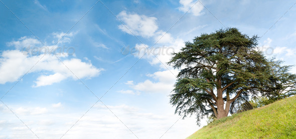 tree on hill - Stock Photo - Images