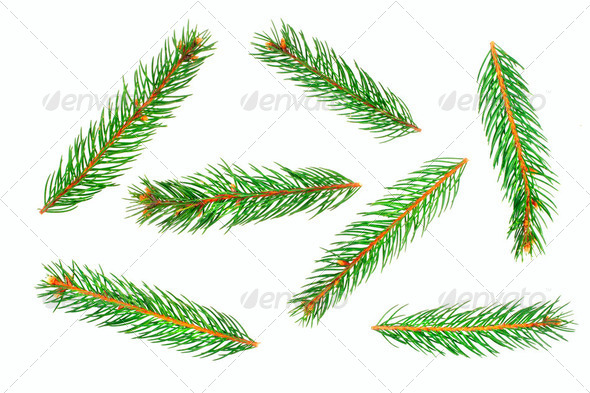 Green pine tree branches isolated on white background - Stock Photo - Images
