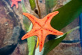 Starfish Underside - PhotoDune Item for Sale