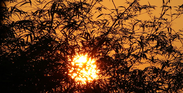 Sunrise And Bamboo Leaves I