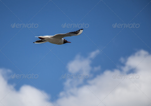 Bird in sky - Stock Photo - Images
