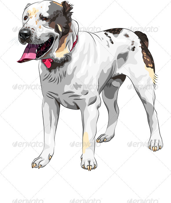 GraphicRiver Vector Sketch Central Asian Shepherd Dog breed 3272771