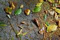 Fallen Leaves - PhotoDune Item for Sale