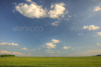 Green field and the dark blue sky