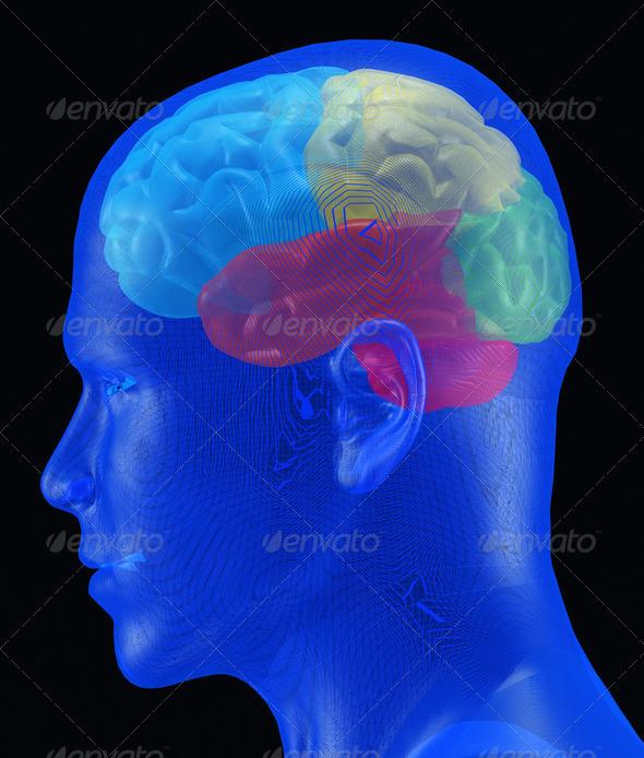 PhotoDune Brain 2109076