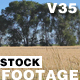 Wheat Field - VideoHive Item for Sale