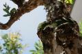 Tree Trunk - PhotoDune Item for Sale