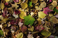 Autumn Carpet - PhotoDune Item for Sale