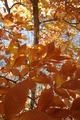 Flamboyant Foliage - PhotoDune Item for Sale