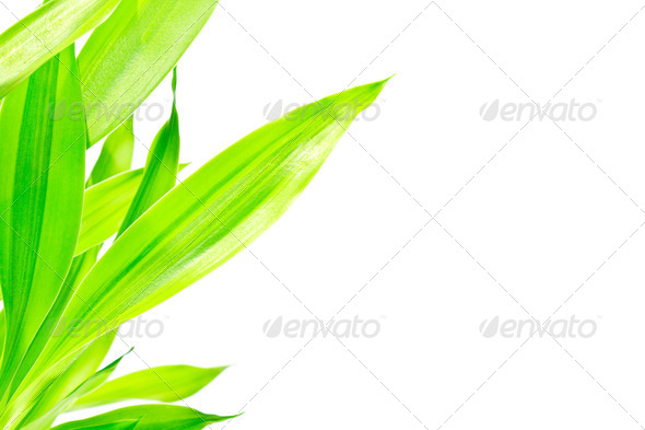 Green leaves on white background - Stock Photo - Images