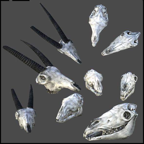 3DOcean Animal Skulls 3290884
