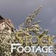 """Village -cherry"" Stock Footage Full HD H264"