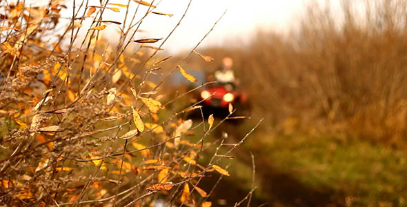 Autumn Yellow Leaves And ATV Quad Bike