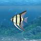 Aquarium Fish Transition - VideoHive Item for Sale