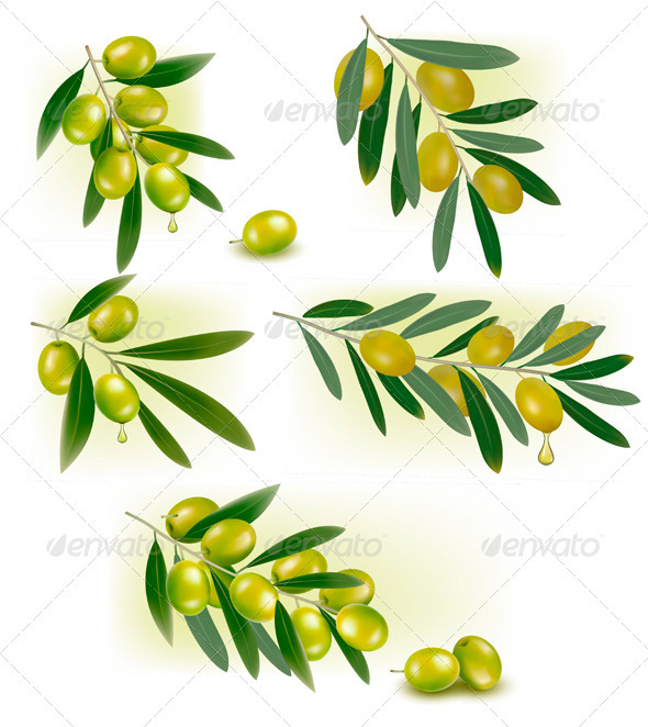 GraphicRiver Set of Backgrounds with Green Olives Vector 3297978