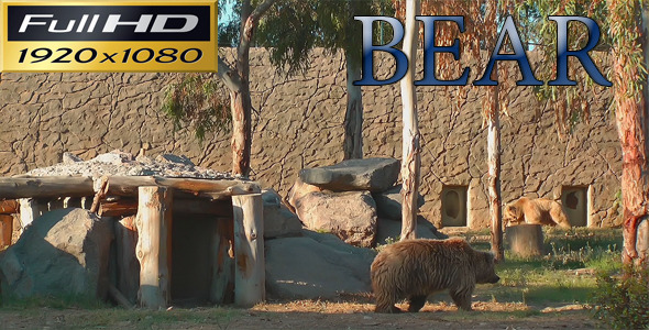 Bear in the Zoo Park Nature FULL HD