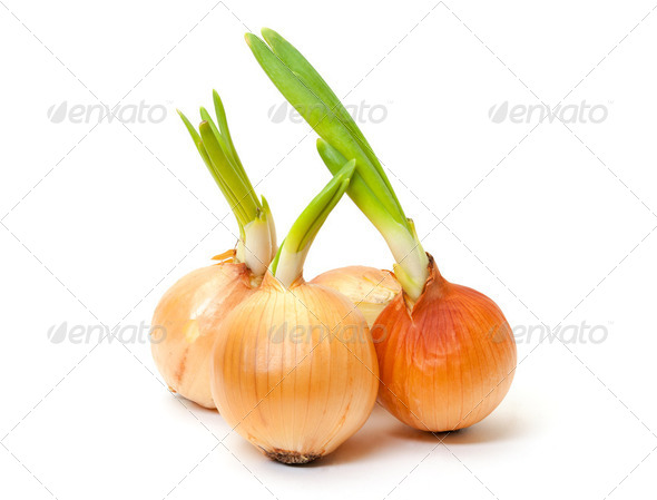 Sprouting Bulb Onions - Stock Photo - Images