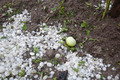 Hail Storm Disaster in garden - PhotoDune Item for Sale
