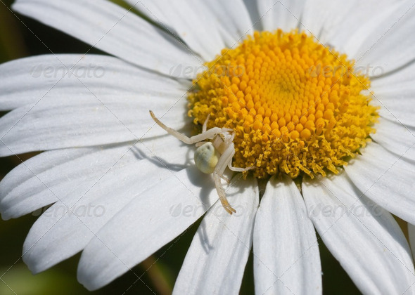 White spider - Stock Photo - Images