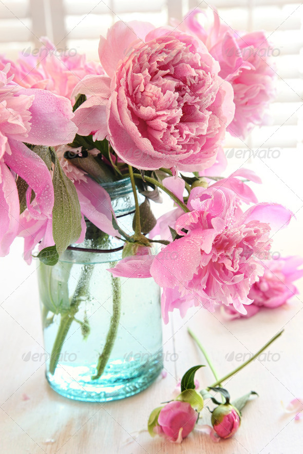 Pink peonies in glass jar - Stock Photo - Images