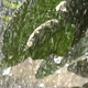 Leaves in the Rain - VideoHive Item for Sale