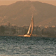 Sailboat Travels in front of a City - VideoHive Item for Sale