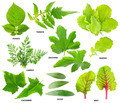 Leaves of  vegetable plants - PhotoDune Item for Sale