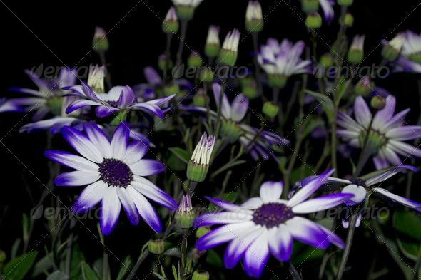 Purple White Flower - Stock Photo - Images