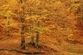 Late Autumn - PhotoDune Item for Sale
