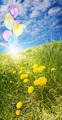 Sunny field with balloons - PhotoDune Item for Sale