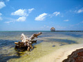 Beach Drift Wood San Pedro Belize - PhotoDune Item for Sale