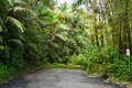 End of the Road El Yunque Rainforest Puerto Rico - PhotoDune Item for Sale