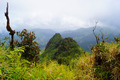 Landscape El Yunque Rainforest Puerto Rico - PhotoDune Item for Sale