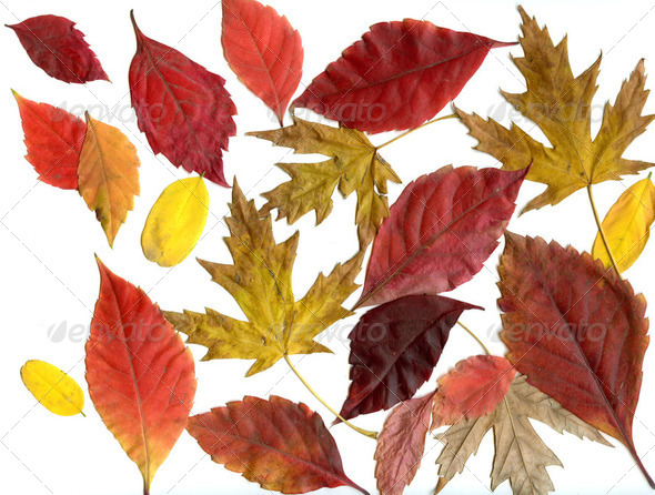 collection of autumn leafs - Stock Photo - Images