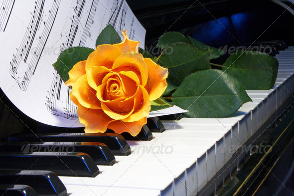 rose on  musical note - Stock Photo - Images